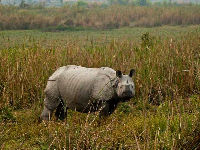 Kaziranga National Park, Places to visit in India in february