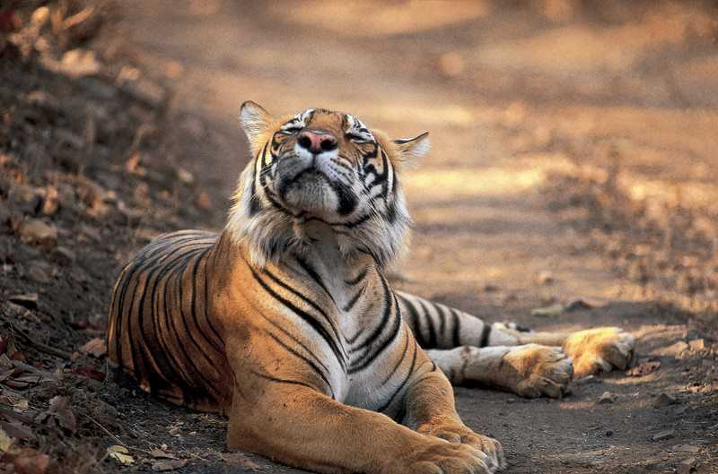 Sariska Tiger Reserve, road trip from Delhi