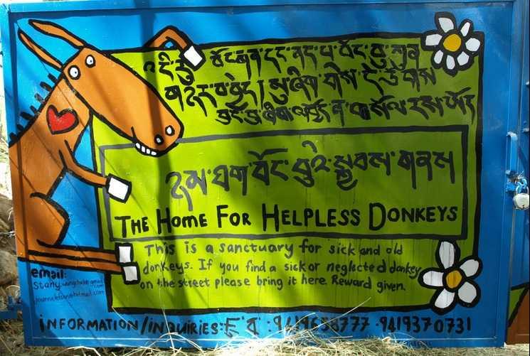 Donkey Sanctuary, Ladakh