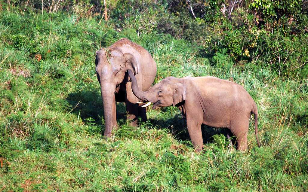 Elephant sight seeing in Gavi, places to visit in South India