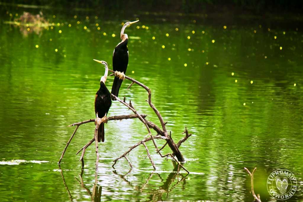 Keoladeo National Park, world heritage sites in india