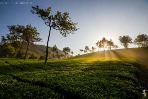 Munnar, Honeymoon destinations in India