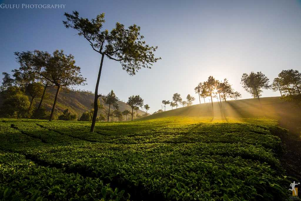 Munnar Tea Gardens, places to visit in South India