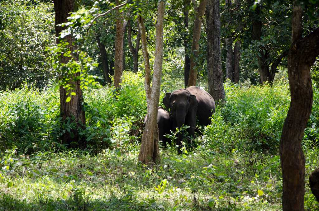 Nagarhole Wildlife, tourism in south India