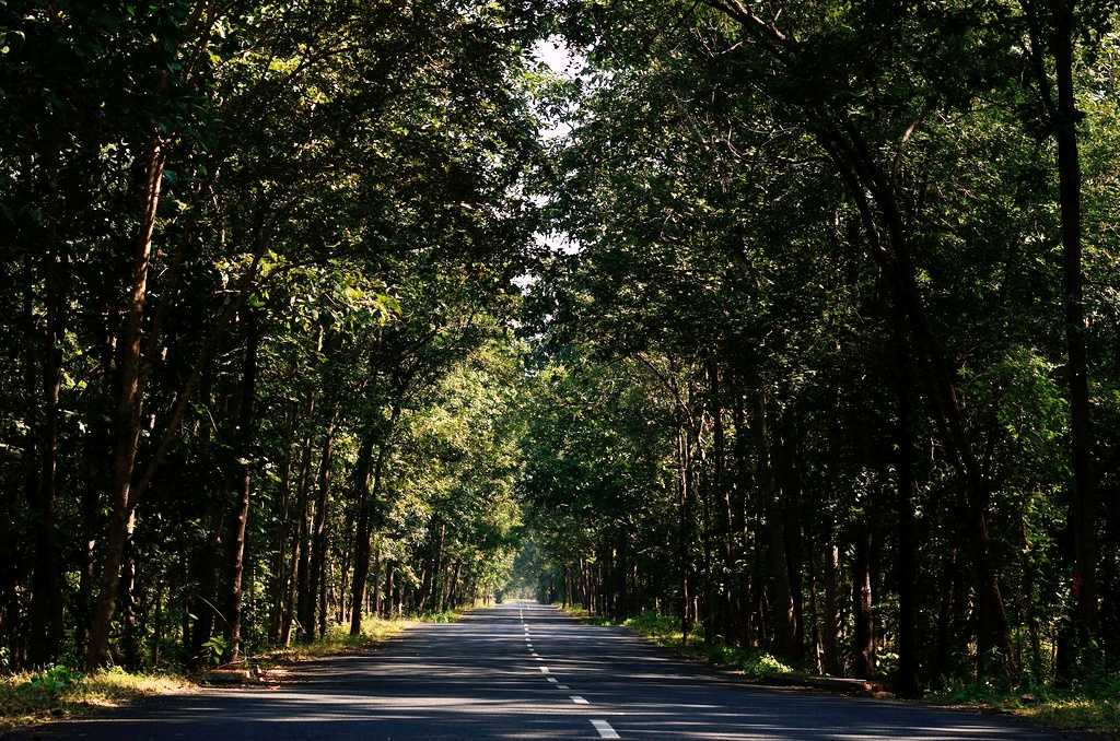 Road between the forests, Bhadrachalam