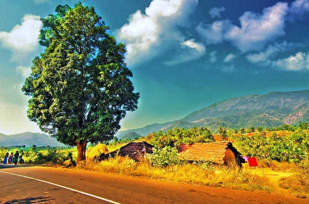 Road to Araku Valley (Credits: Source)
