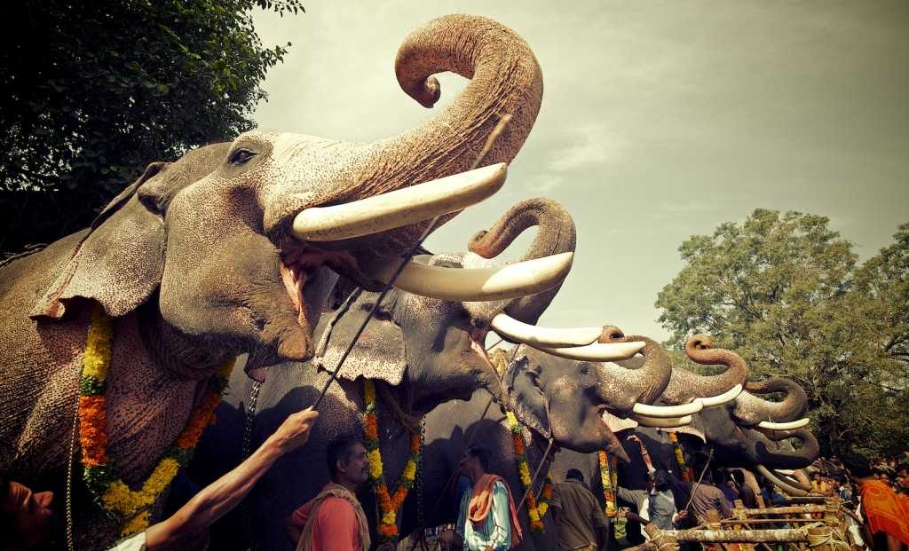 Thrissur elephant festival, tourist places in South India