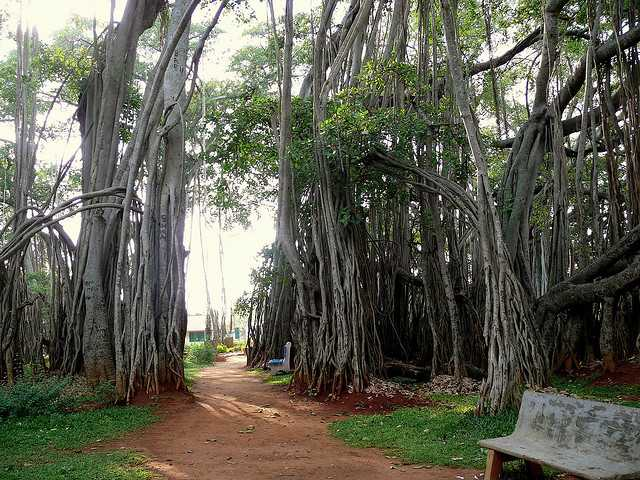 Big Banyan Tree one day outing in bangalore