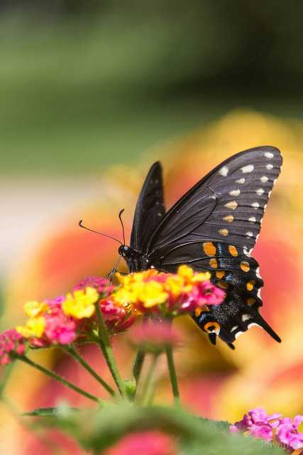 Butterfly Park, places to visit in bangalore in one day