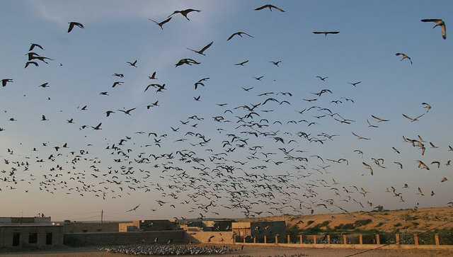 Migatory Cranes at Phalodi, places to visit near delhi in monsoon