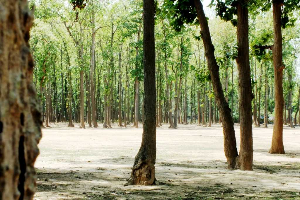 Sal tree forest, Jhargram