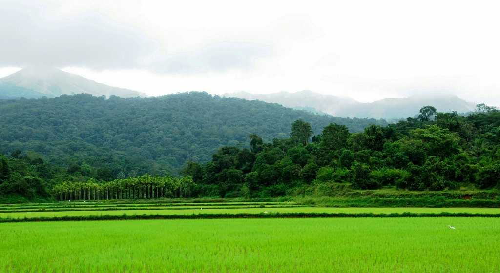 coorg, monsoon travel destination in India