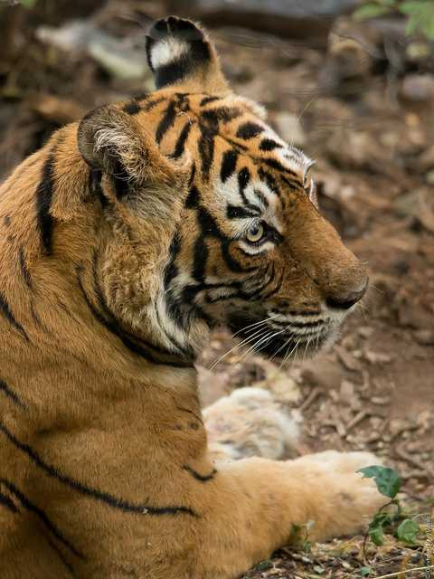 Ranthambore, Places to visit in india in december