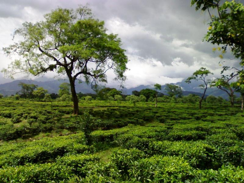 Tea gardens in dooars, best places to visit in september in india