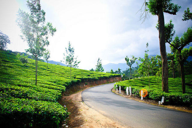 Chennai to Munnar, best road trips in India