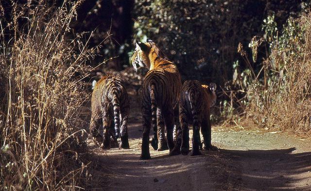 Jaipur to Ranthambore, Road Trips India