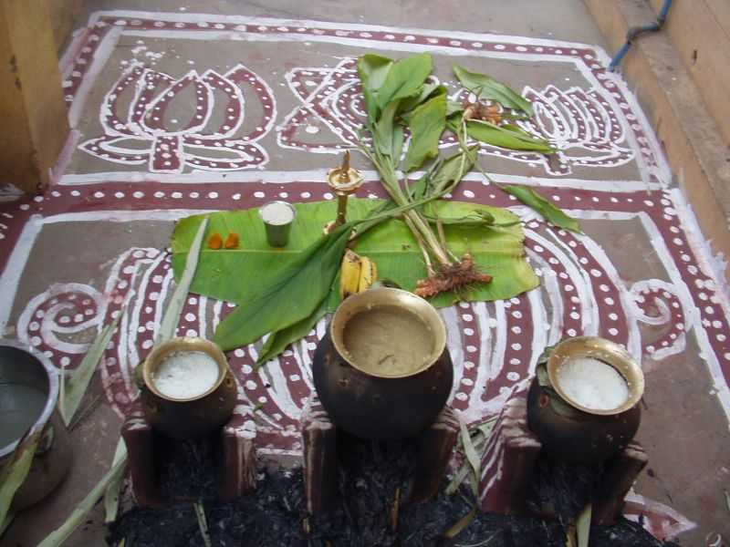 Pongal, Cultural Festivals in India