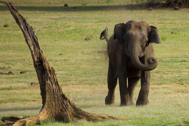 Kabini - best wildlife sanctuary in January in India