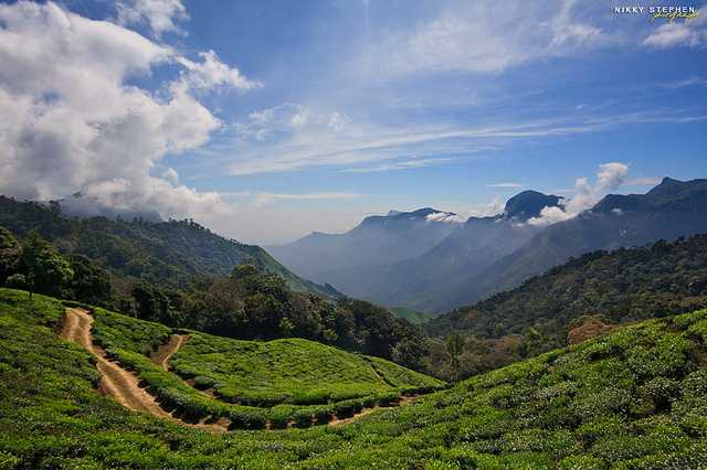 Munnar, Winter Holiday Destination from Mumbai