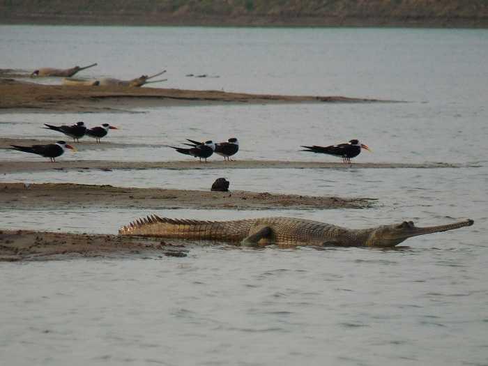 National Chambal Wildlife Sanctuary offbeat travel
