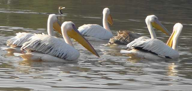 Bharatpur Bird Sanctuary, Places near delhi winters