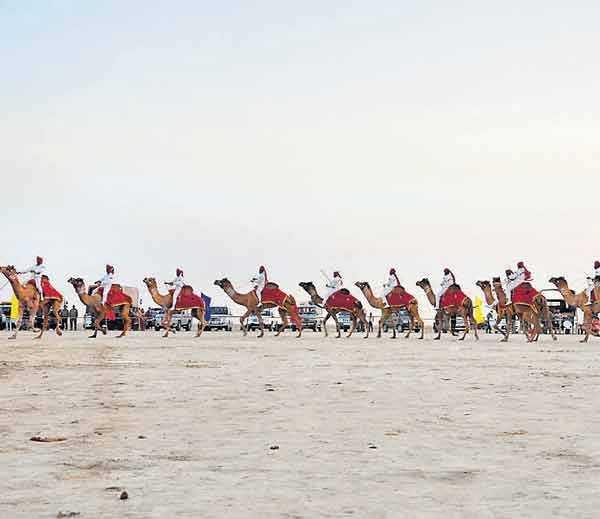 Camel Safari, Rann Kutch Utsav