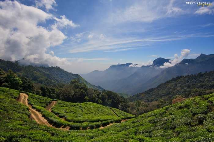 Sprawling Munnar, Places To Go After Graduation With Your Friends