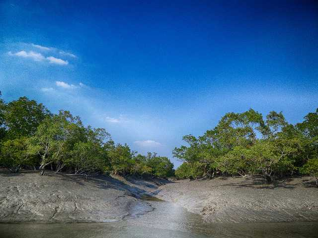 Sundarban Tiger Reserve, Tiger Reserves of India