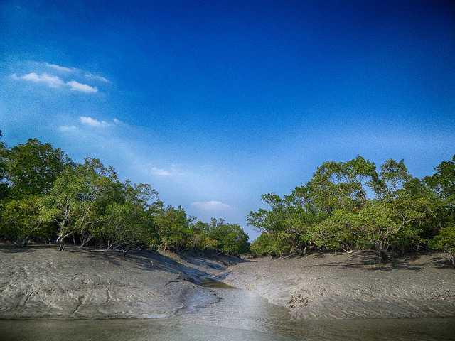 Sundarban Tiger Reserve, Tiger Reserves of India