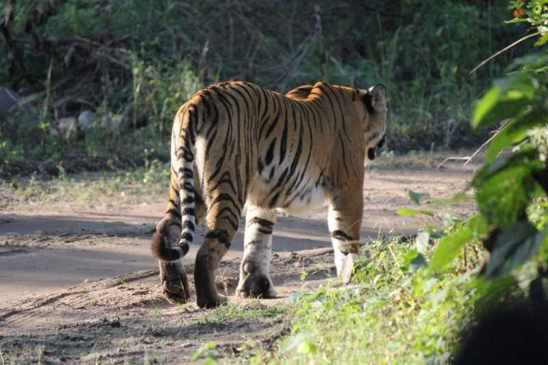 Jim Corbett national park, India's Tiger Reserves