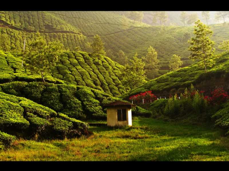 Munnar, places to visit in march in India
