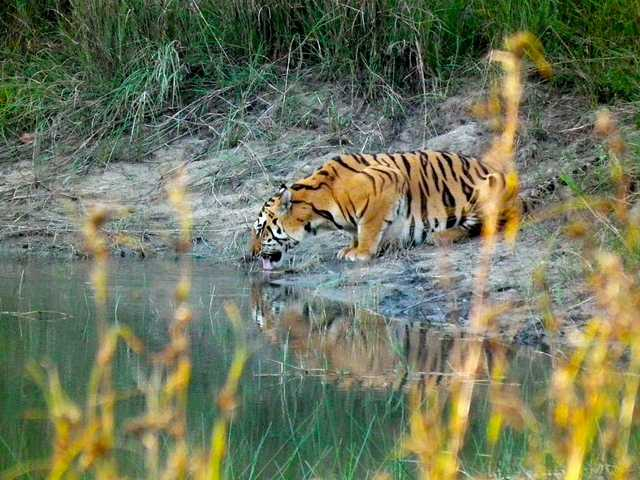 Pench Tiger reserve, Tiger Reserves in India