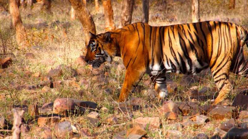 ranthambhore, places to visit in march in India