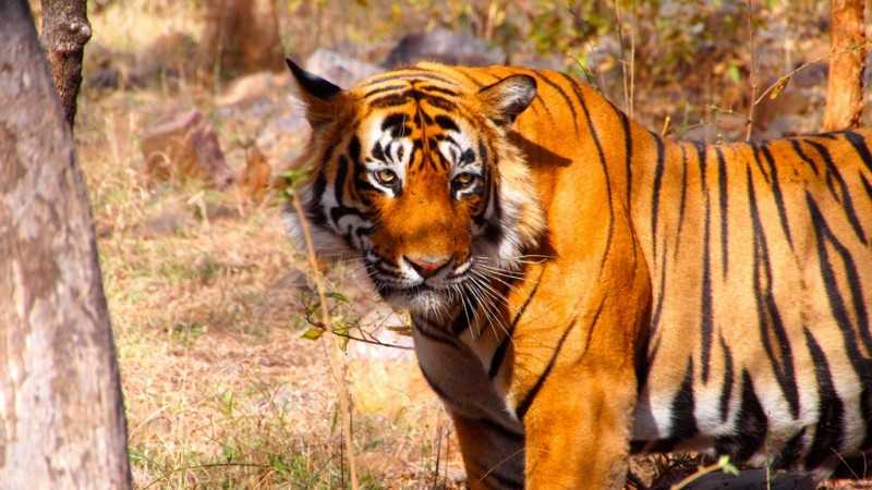Ranthambore, Tiger reserves in India