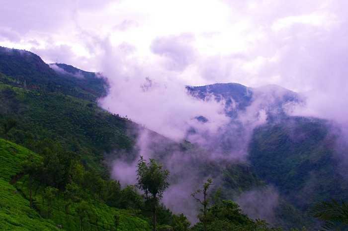 Misty tea gardens Romantic place near Bangalore