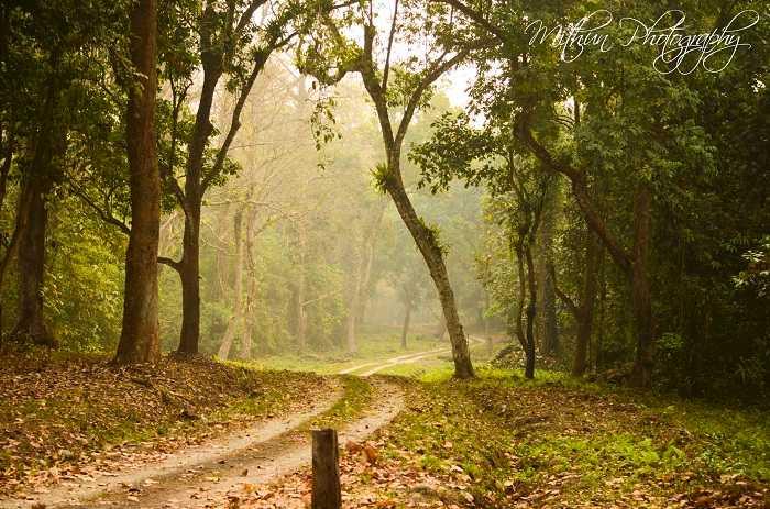 Gorumara National Park, Romantic Getaways from Kolkata, Romantic Places Near Kolkata, Valentine's Day
