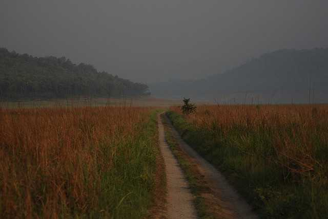 Jim corbett national park, Places to spot tigers in India