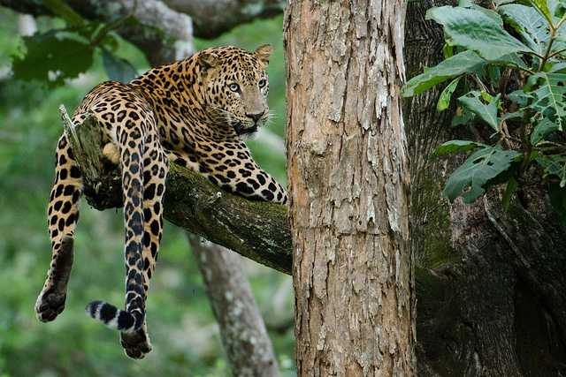 Nagarhole, Tiger reserves in India