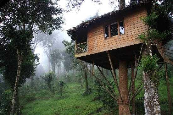 Nature Zone Tree House Resorts