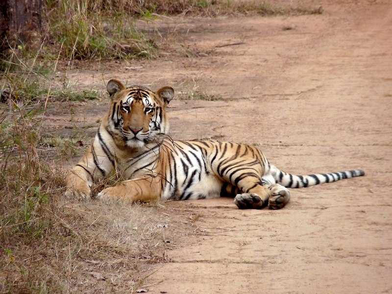Nagzira Wildlife sanctuary, Tiger reserves in India