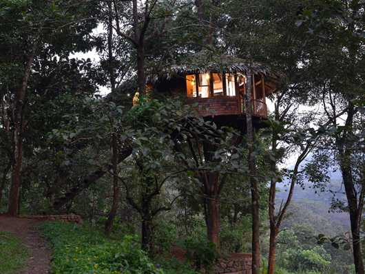 Rainforest Boutique tree houses in India