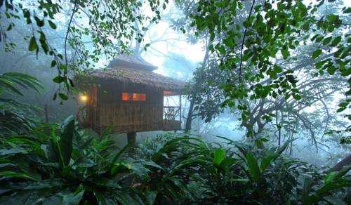 Vanya tree houses in kerela