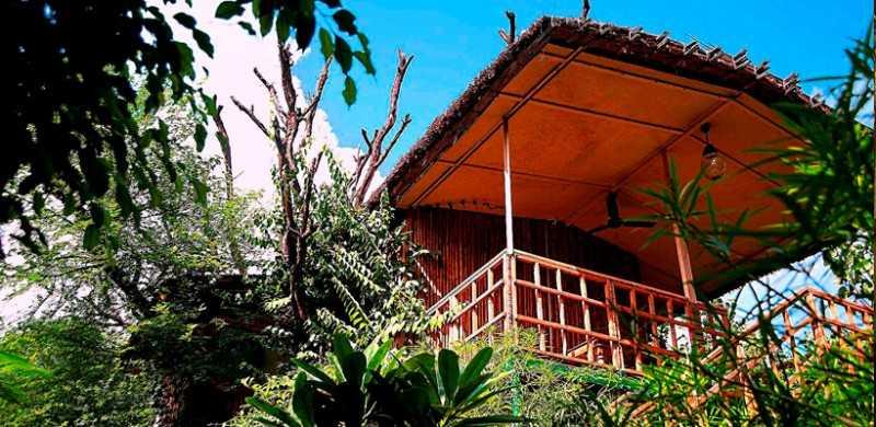 Jaipur tree house resort