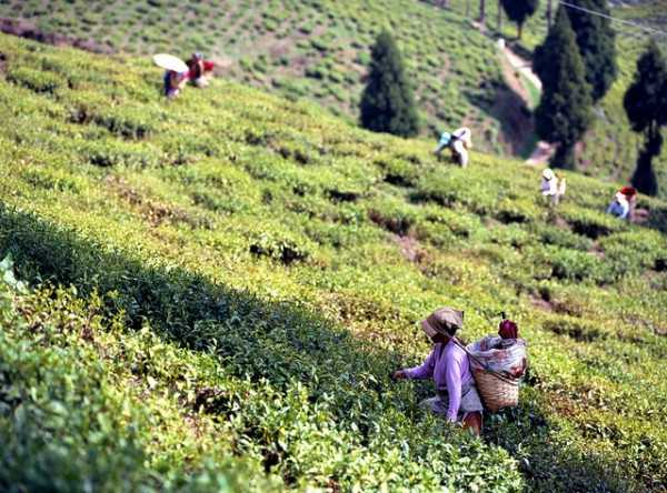 Darjeeling - Best places to visit in May in India