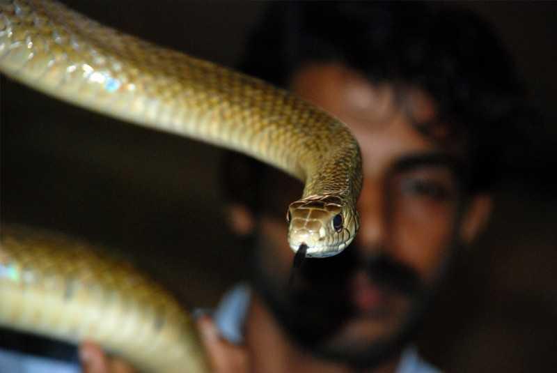 Parassinikkadavu Snake Park - snake demonstrator