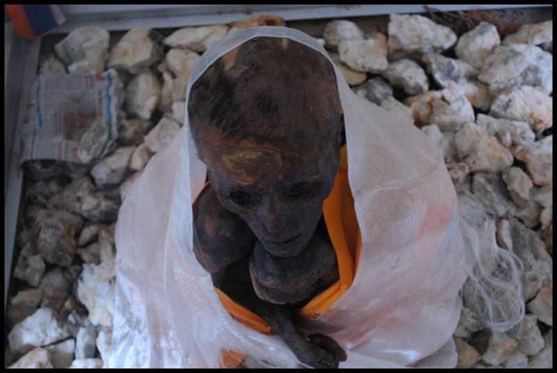 Lama Mummy
