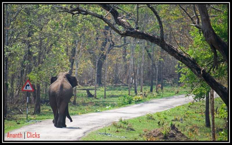 Best Places near Bangalore for Summers, nagarhole