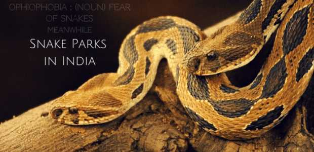 Snakes that charm: Best snake parks in India