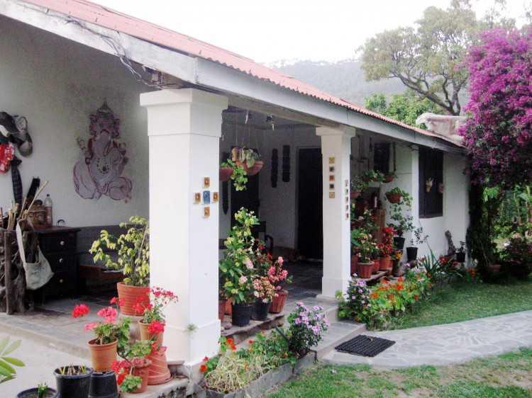 Darang tea plantation in India