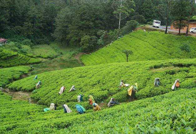 Cooch behar, best tea plantation in India